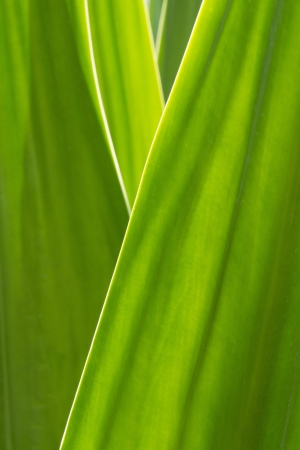 classifier: Abstract pattern background of green leaves