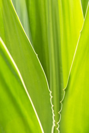 classifier: Abtract pattern background of green leaves