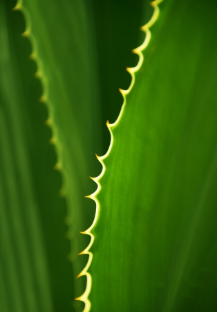 florae: Abtract pattern background of green leaves