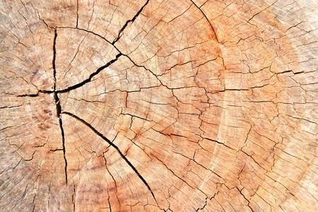Old cracked tree stump wood texture  photo