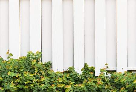 door leaf: White wooden wall with green leaf  Stock Photo