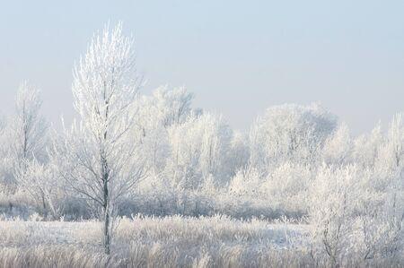 Frost bedekte bomen Stockfoto