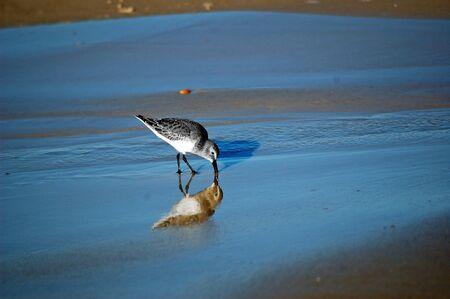 Strand vogel reflectie in het water
