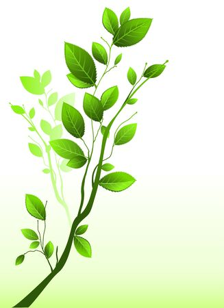 Green branch Vector