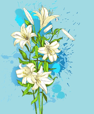 Hand drawn lily on blue grunge  background Vector
