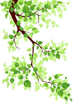 Branch Stock Vector - 9460301