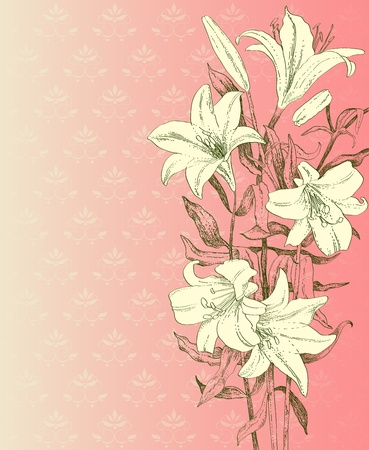 Drawn lily on pink background Vector