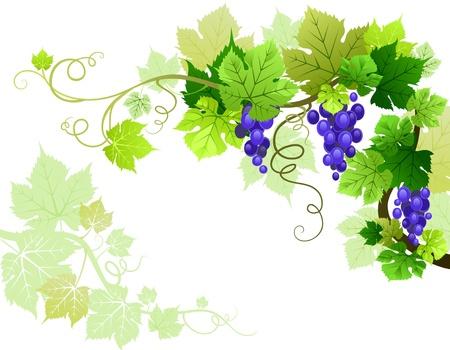 cultivating: Uvas