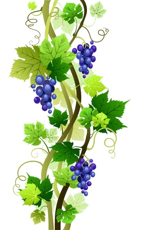 grape harvest: vine with space for text