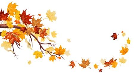 bladeren: Esdoorn bladeren