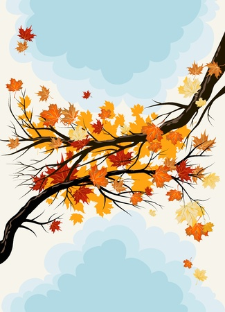 Maple branches Stock Vector - 10102002