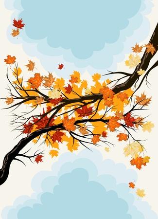 Maple takken Vector Illustratie