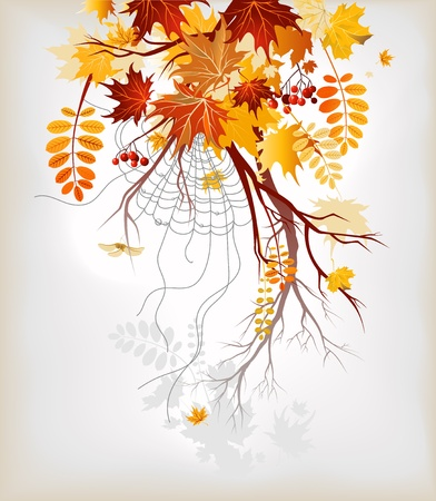 spiderweb: Autumn leaves background