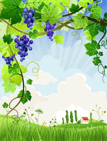 Beautiful landscape with a vineyard with space for text   Vector