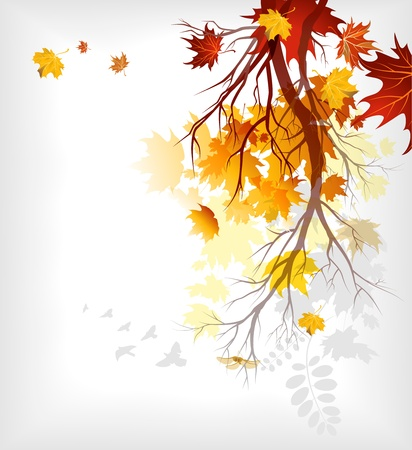 Maple autumn  leaves eps10 Vector