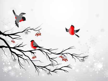 rowan: Branch and birds bullfinch with space for text