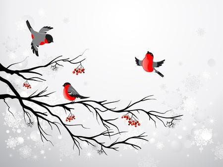 Vogelbeere: Branch und Vögel Dompfaff mit Platz für Text