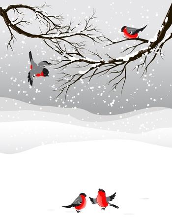 Winter achtergrond met vogels goudvink met ruimte voor tekst Vector Illustratie