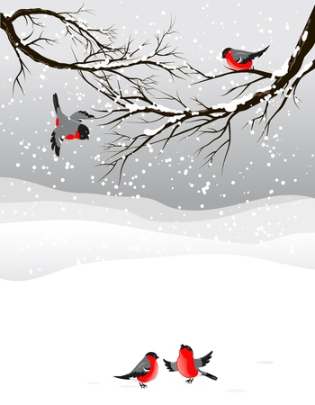 christmas landscape: Winter background with birds bullfinch with space for text