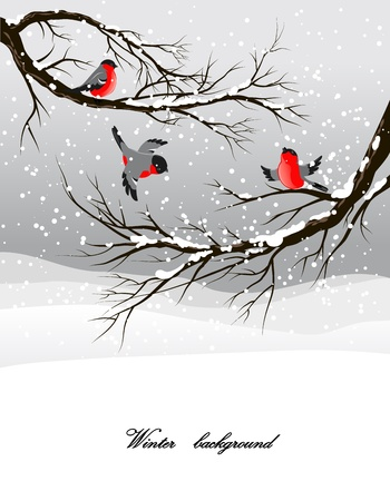 Winter background with bullfinch Vector