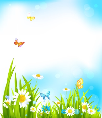 daisy field: Vector spring background with beautiful flowers and butterflies Illustration