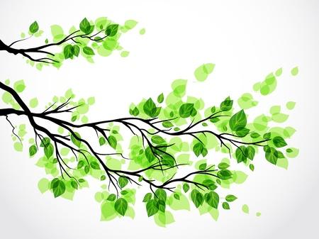 Branche avec des feuilles vertes Banque d'images - 20544682
