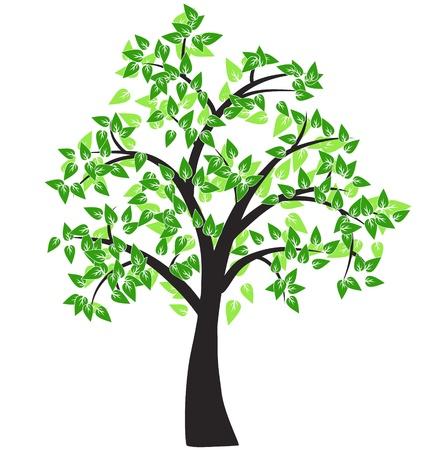 arbre     ? � feuillage persistant: Arbre d�coratif Illustration
