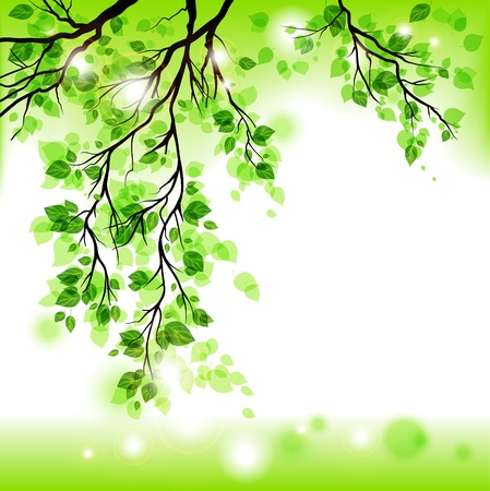 foliages: Spring background  Illustration