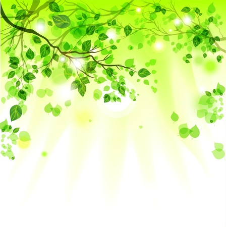 Spring leaves light background