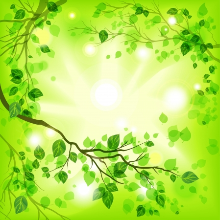 beautiful summer growth: Spring light background
