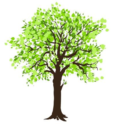 lone tree: Tree