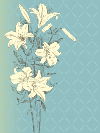 Vintage background with lily flower  Vector