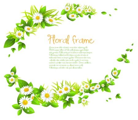 식물상: 텍스트를위한 공간 카모마일 프레임.