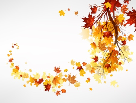 fall down: Branch with maple leaves with space for text
