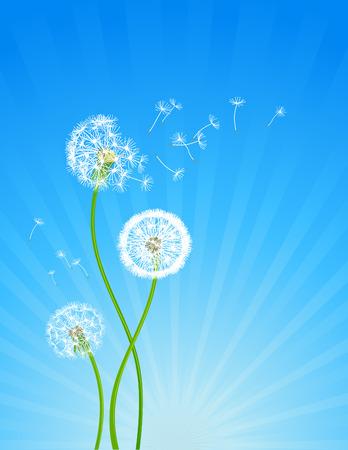 dispersal: Summer background with dandelion flowers Illustration