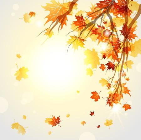 hojas parra: Ramas con hojas de otoño con el espacio para el texto