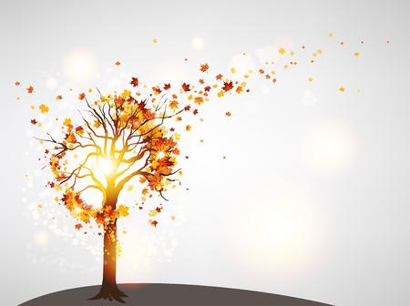 Mooie herfst boom en zonlicht