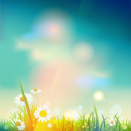verano: La salida del sol de verano o el atardecer de fondo con lugar para el texto Vectores