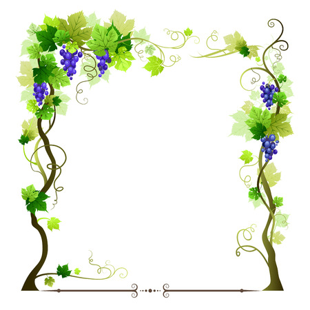 Blue ripe vineyard frame Vector