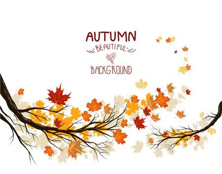 autumn forest: Rami d'autunno con le foglie d'acero di colore giallo Vettoriali