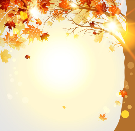 autumn trees: Autumnal trees with maple autumn leaves and sunlight. Place for text