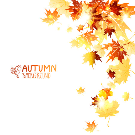 Falling maple leaves isolated on white background. Autumn vector illustration. Copy space