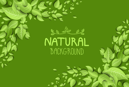 Green eco background with fresh leaves.Place for text Imagens - 31998848