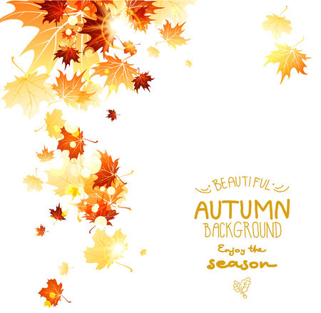 Background with maple autumn leaves. Place for text. Vector