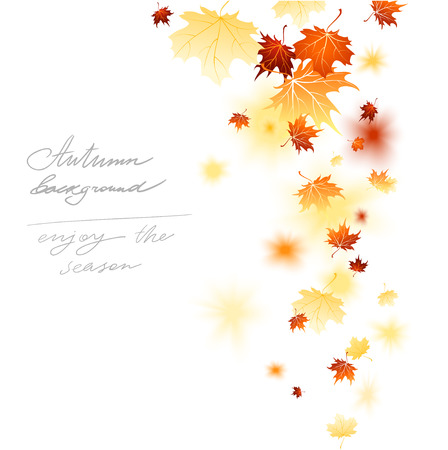 falling leaves: Maple falling leaves isolated with place for text.