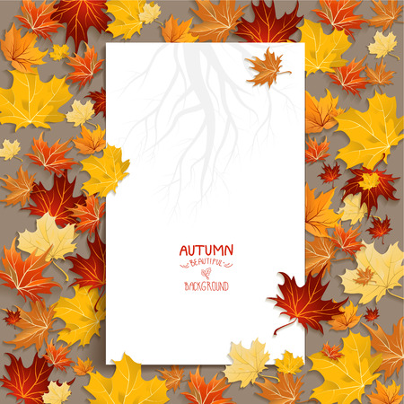 autumn background: White blank with autumn maple leaves. Copy space
