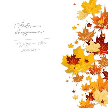 Beautiful autumn design with naple leaves isolated on white Illustration