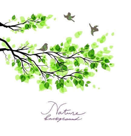 for text: Uccelli con rami verdi. Estate o primavera sfondo natura con il posto per il testo.