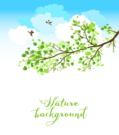 sfondo natura: Sfondo della natura con cielo d'estate e gli uccelli. Posto per il testo