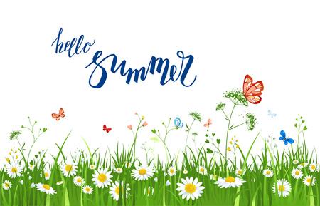 summer green grass Illustration